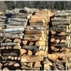Romsilva a lăsat cetățenii la mâna samsarilor de lemn de foc. Prețurile sunt astronomice