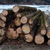 Cum a câștigat o rudă a primarului de Pângărați 500 mc de lemn la o licitațieorganizată de primărie