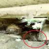 Apaserv confirmă dezvăluirile atacul.ro. Pierderile de apă, ținute la secret